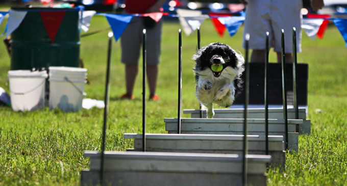 Dog Days of Denton celebrate 20th anniversary