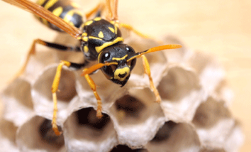 Bees and wasps more active this time of year