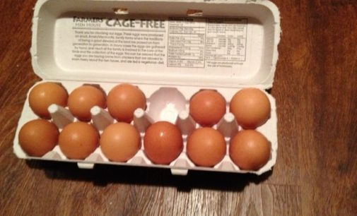 Petition helps spur UNT Dining to implement cage-free eggs
