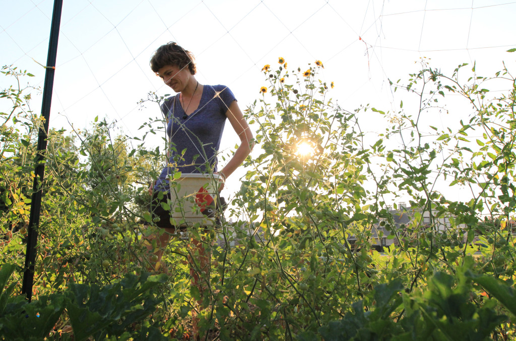 Andrea Buxton picks and chooses from her assortment of plants at Denton Backyard Farms. Photo by James Coreas / Contributing Photographer