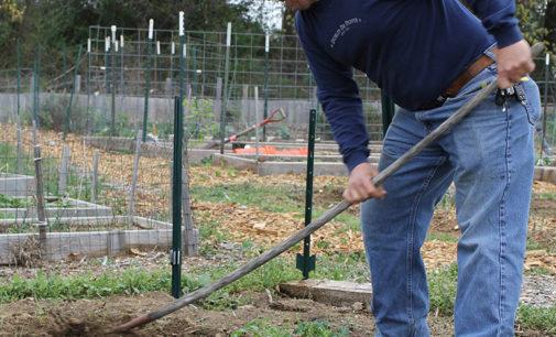 Field of Dreams: Community garden helps people in poverty