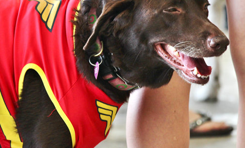 Dentonites devote day to playful pooches