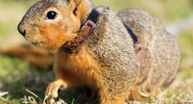 Cedar the squirrel: man's new best friend