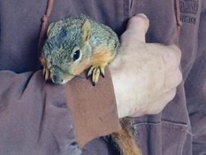 16_squirrel_web3