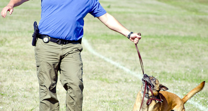 Police canines get certified in necessary skills