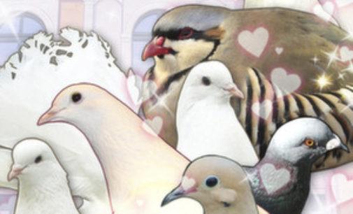 The Dose: Hatoful Boyfriend is best pigeon dating sim ever