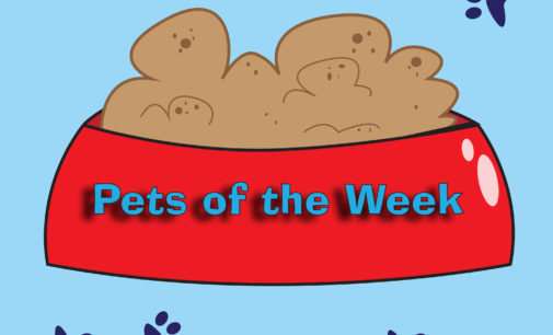Pets of the Week – April 24