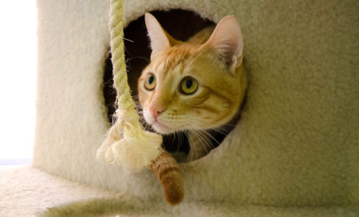 Pets of the Week – July 26