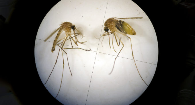UNT mosquito trap tests positive for West Nile virus