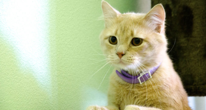 Pets of the Week – August 9