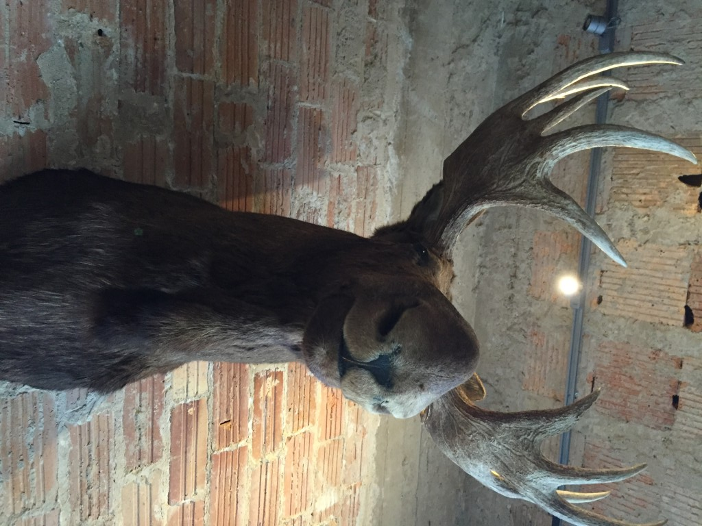 Also available: A moose head.