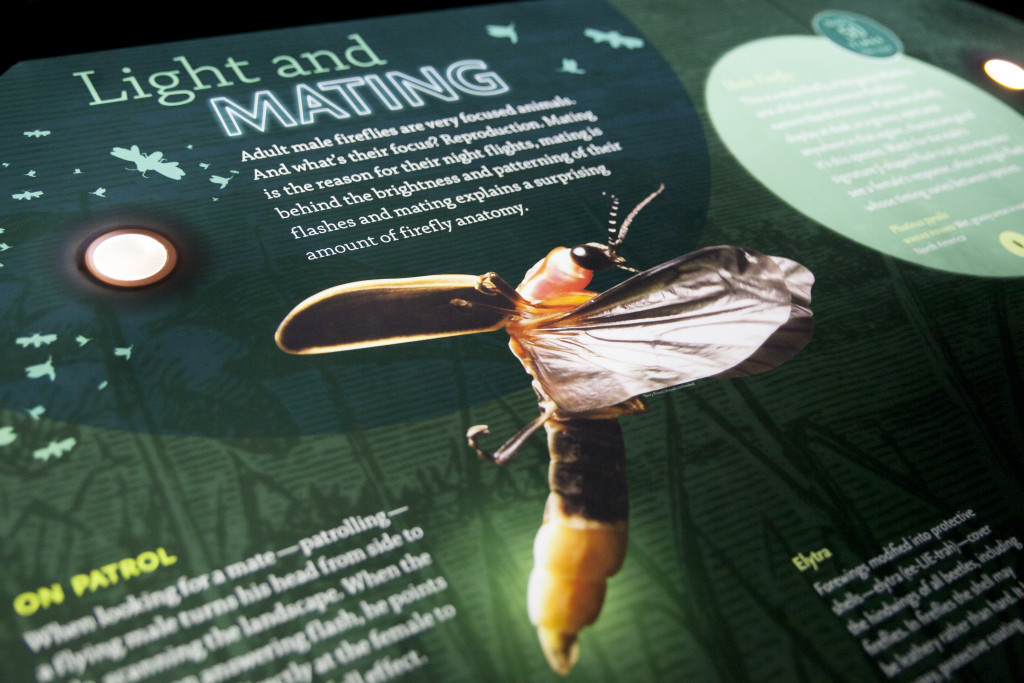 A portion of the bioluminescence exhibit explored fireflies and their use of their flashes to find mates and communicate with each other. Kristen Watson   Visuals Editor