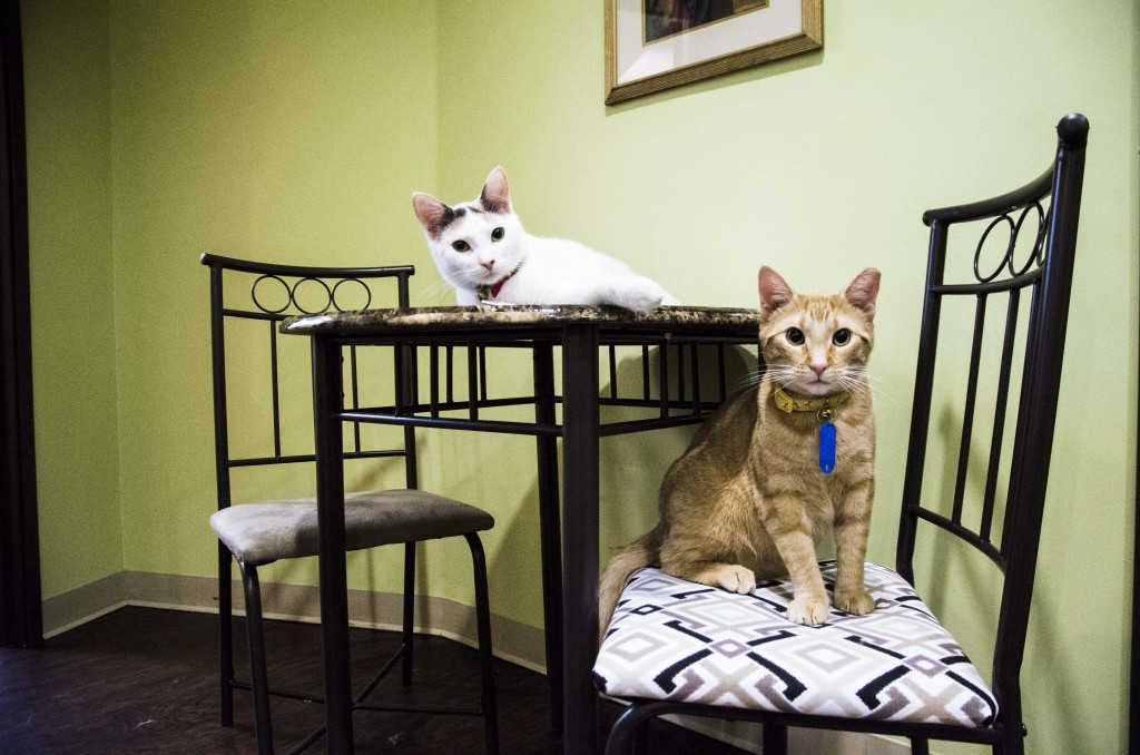 The cats are allowed on the furniture and tables and The Charming Cat Cafe. Hannah Ridings | Senior Staff Photographer