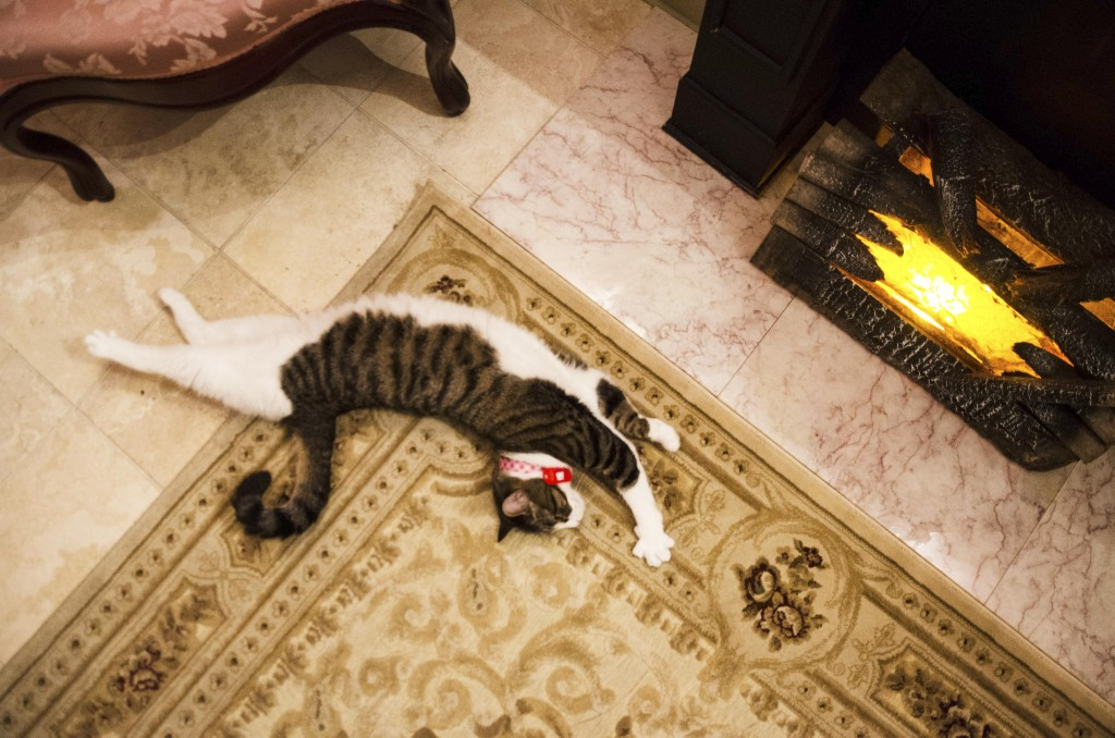 A cat stretches near the fake fireplace in the Victorian room at The Charming Cat Cafe in Lewisville. Hannah Ridings | Senior Staff Photographer