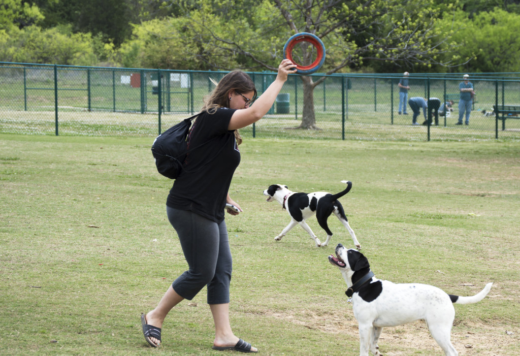 English Bulldog and Boxer mix Addie anticipates as owner Amy Camp is about to toss the Frisbee. Kemi Feyisetan | Staff Photographer