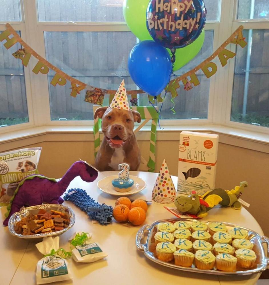 Richie enjoys a birthday party hosted by Monica Ochoa, Denton Animal Shelter volunteer. Kayleigh Bywater | Senior Staff Writer