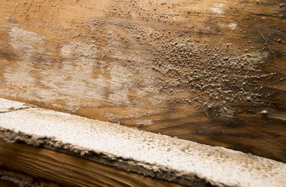 Mold grows on wood in a Scott Brown Properties home. The renter of the home asked to remain anonymous. Hannah Breland | Staff Photographer