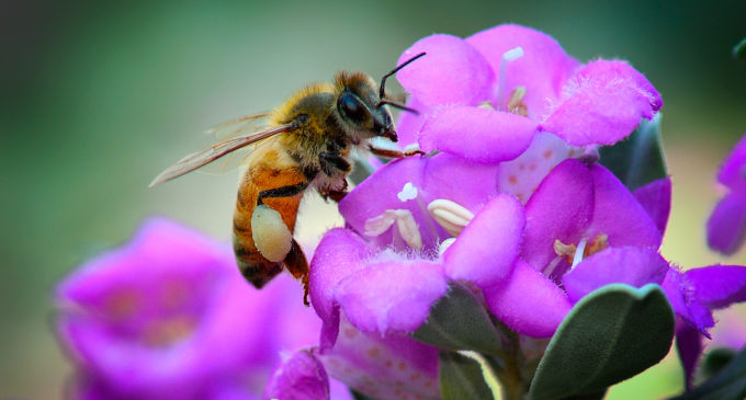 UNT named Texas' first Bee Campus USA
