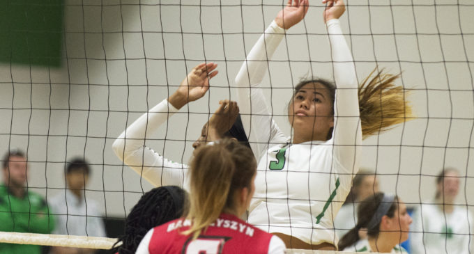 Hawaiian volleyball player providing defense for Mean Green