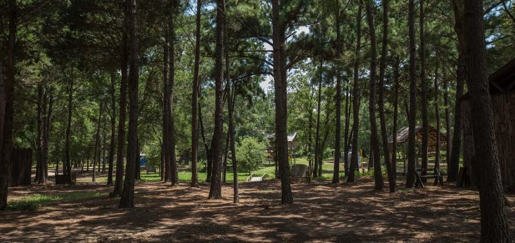 A remote forest outside Austin will host Sound on Sound this weekend