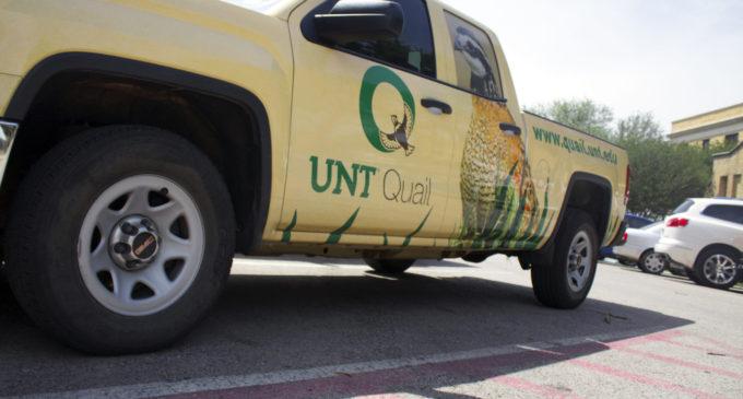 Climate change: UNT researchers monitor quail population