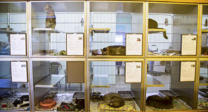 Saving Denton animals one pet at a time