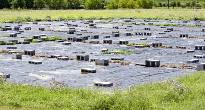 UNT students and professors break ground on the 'pollinative' prairie