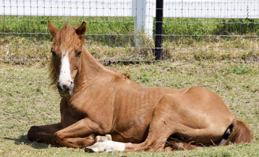 Animal sanctuary provides rehabilitation for both humans and farm life