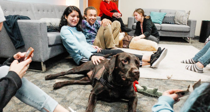 UNT therapy dogs aim to help in ruff times