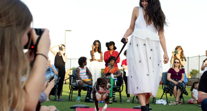 "Best in (Fashion) Show: Denton has a ""doggone"" good fashion show"