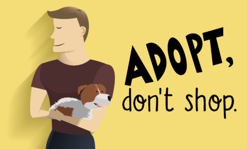 Adopt your pets, don't shop for pets