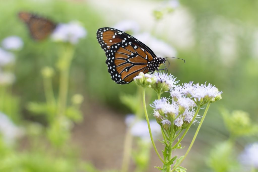 Denton's butterfly garden offers educational opportunities for students, residents