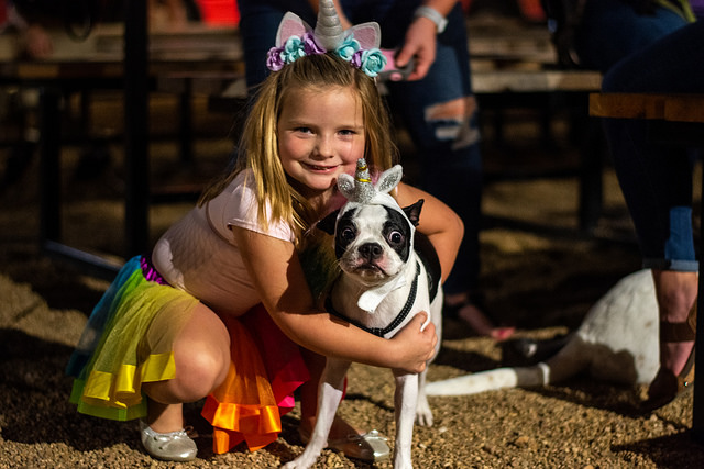 Dog Days of Denton celebrates 25 years with furry friends