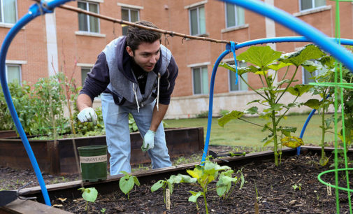 UNT community garden continues to grow deeper roots