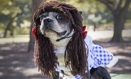Piggie Sue: The furry, four-legged fashionista of Denton