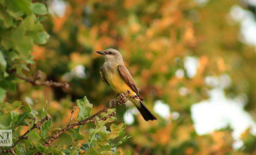 Audubon begins partnership with university ecology research chapter