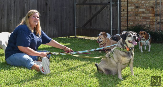 Denton animal shelter reaches capacity